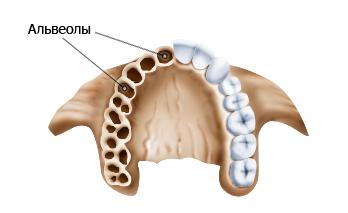 alveolit